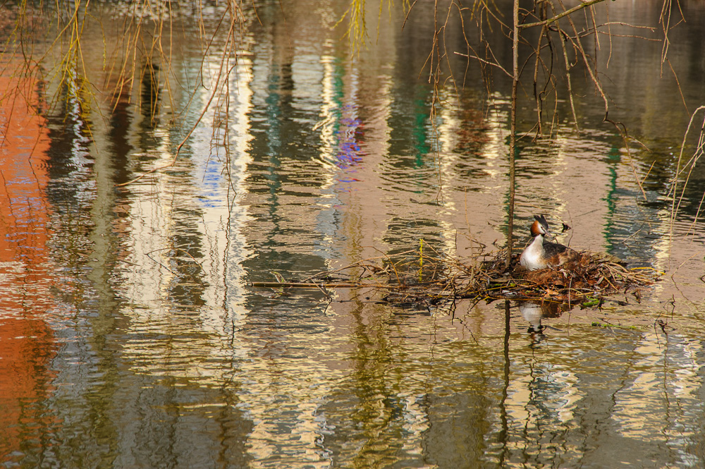 weerspiegeling op het water