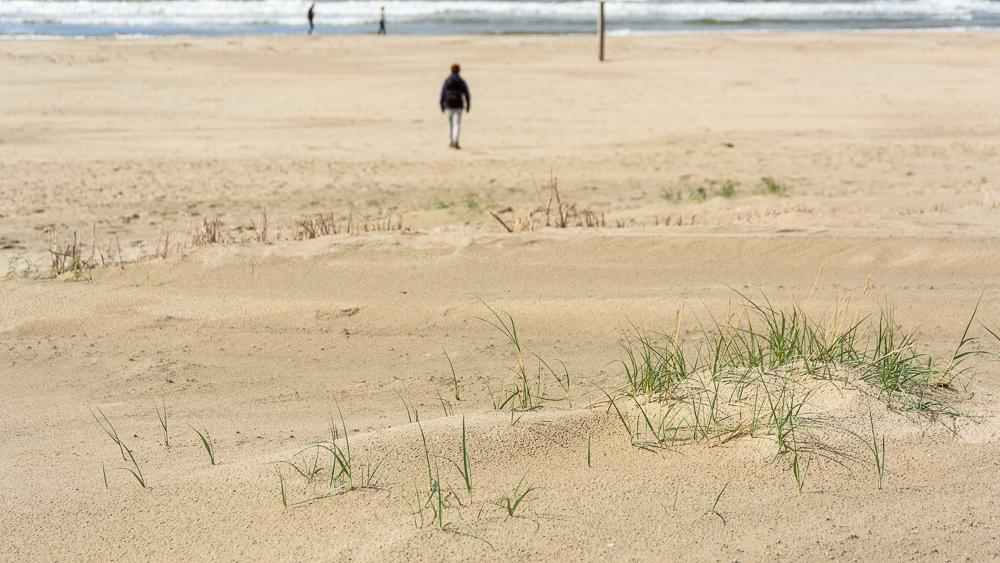 wandelaar op strand hondsbossche zeewering