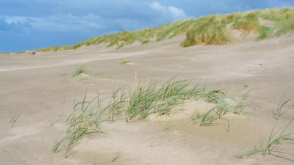 duinen hondsbossche zeewering