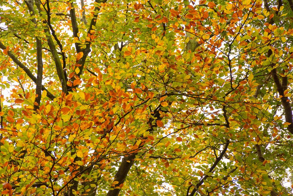 herfstkleuren in de bomen