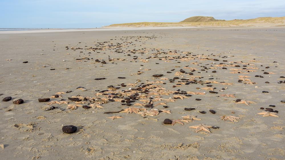 strand hargen aan zee met zeesterren bezaaid