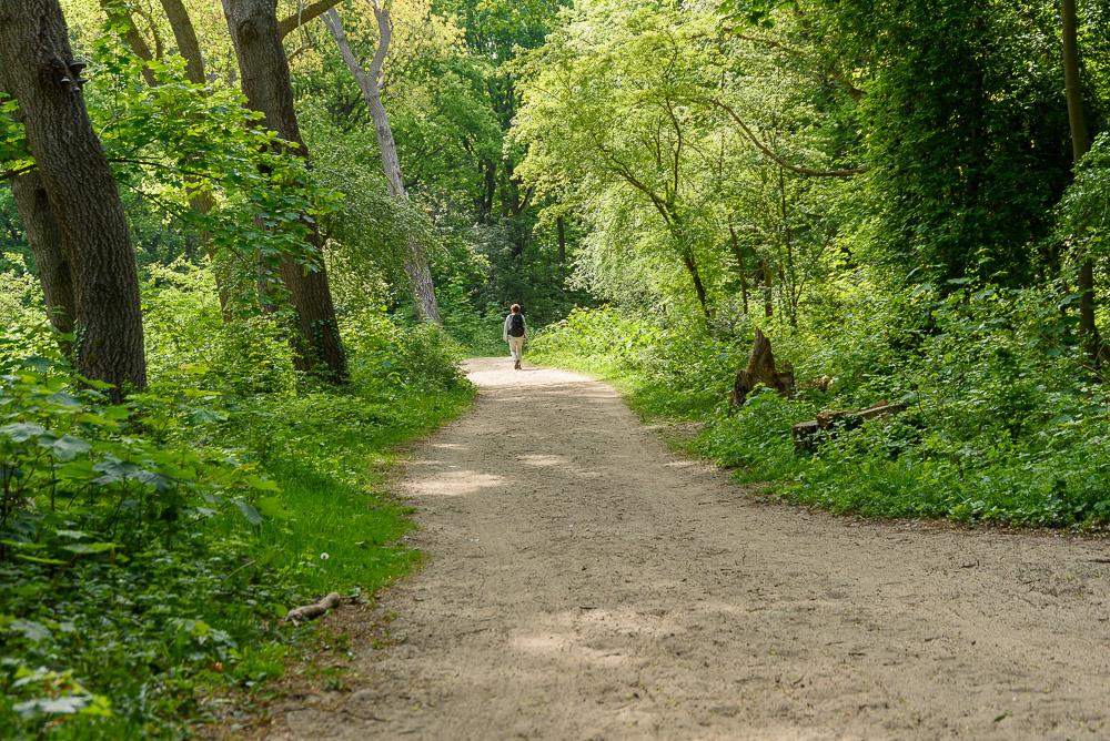 wandelen tussen het frisse groen