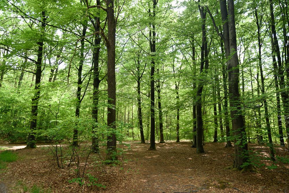 bos langs dwingelderveld