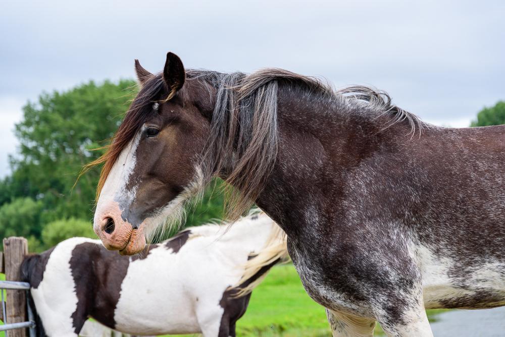Paarden in de wei bij de Obdammer Weel