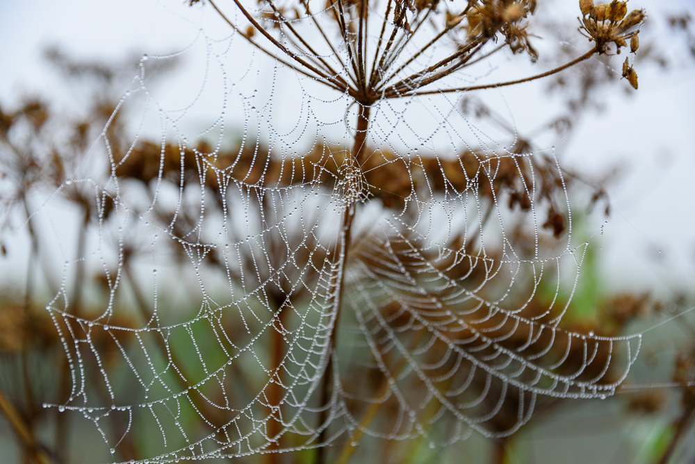 spinnenweb in de mist
