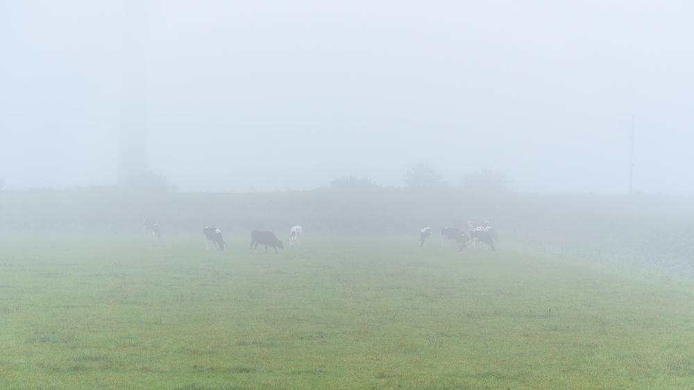 schimmen in de mist