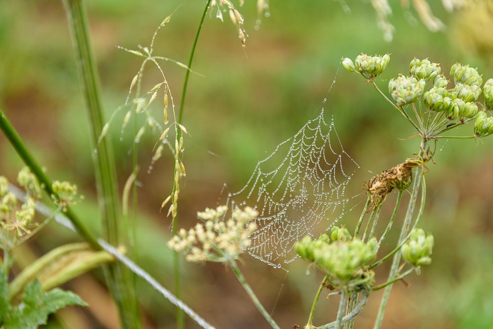 mistig spinnenweb