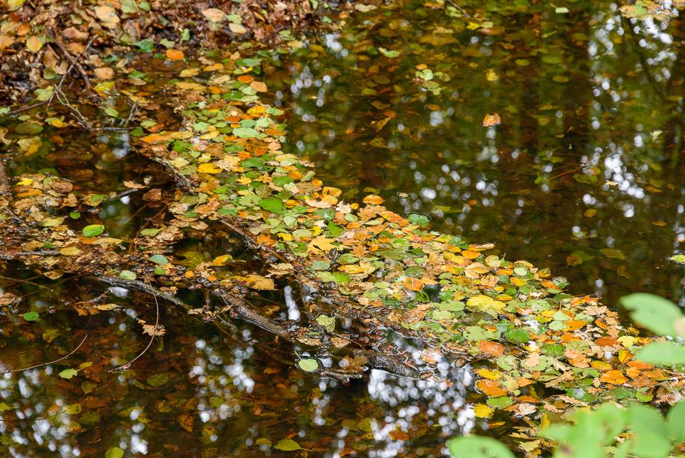 bladeren en weerspiegeling op het water