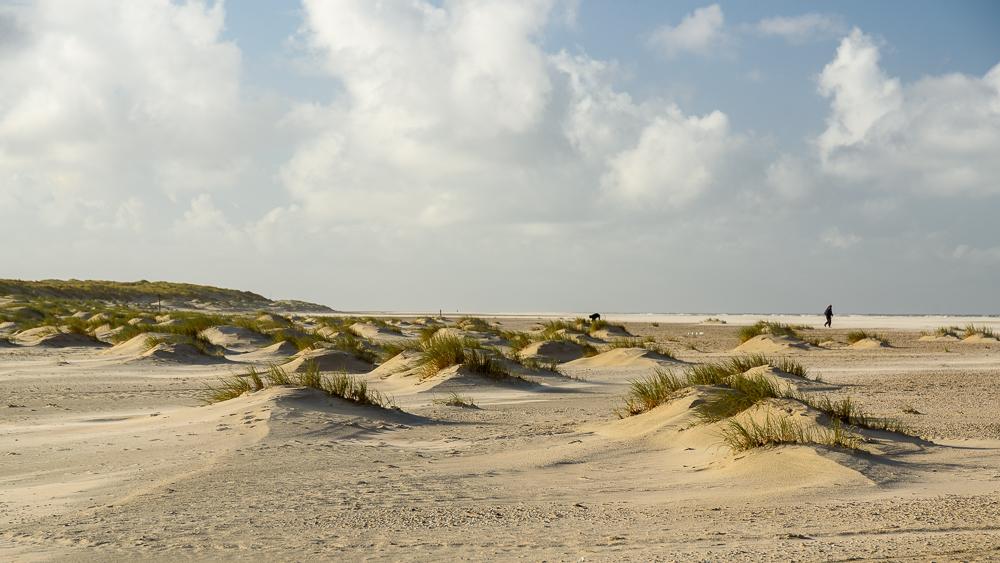 jonge duinen aan de voet van de eierlandse dam op texel
