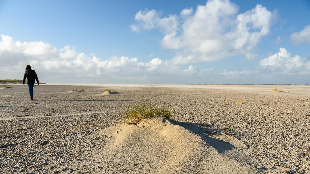 jong duintje op eierlandse strand texel