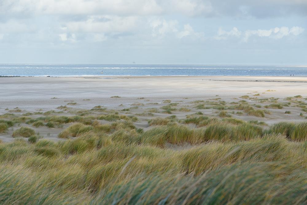 strand en eierlandse dam texel