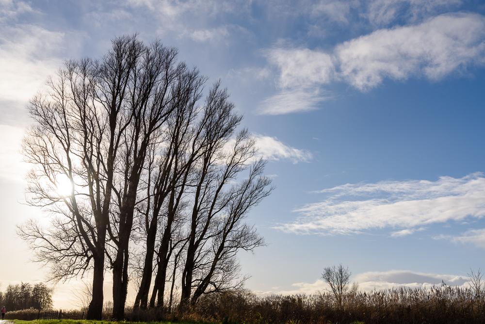 bomen in silhouet