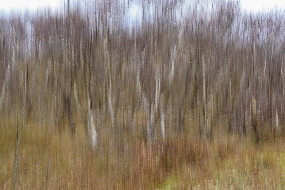 beweging in bomen