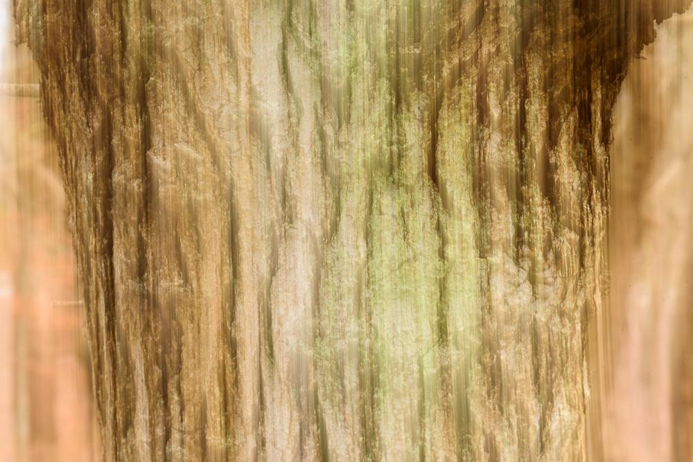 boomschors in beweging