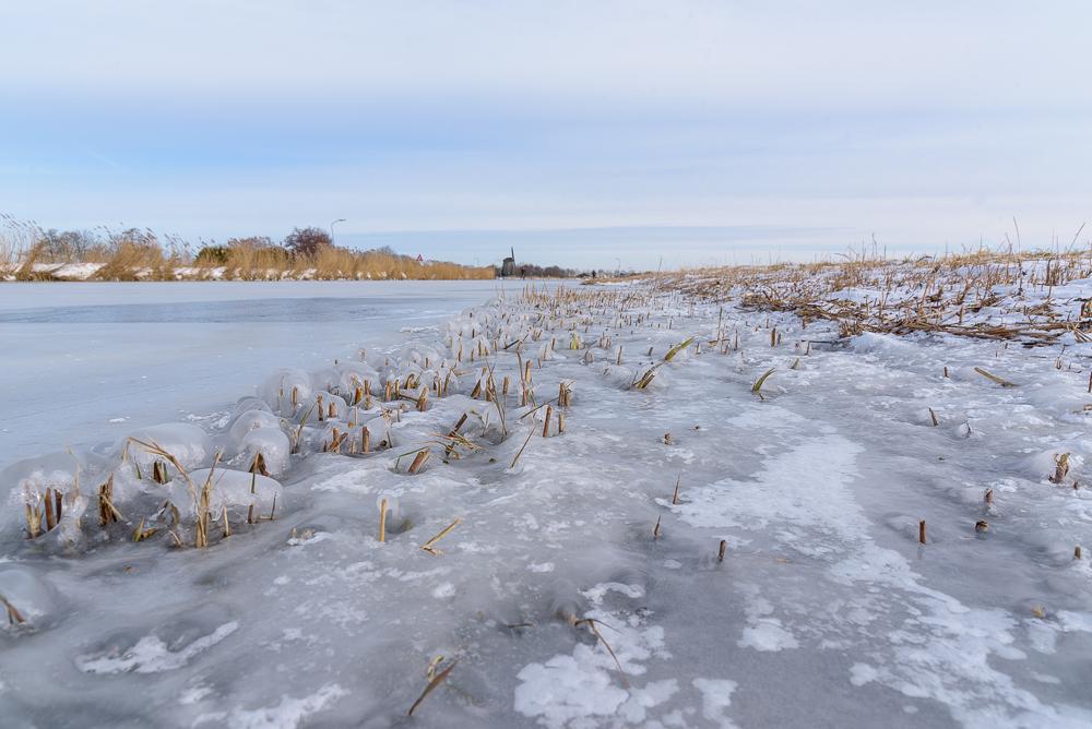 rietstoppel langs de bevroren ringvaart