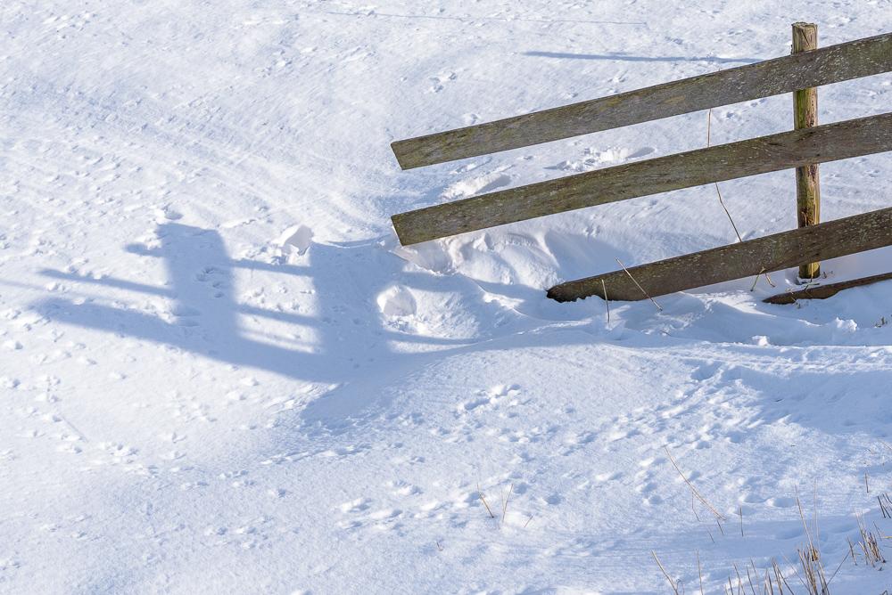 sneeuw in de polder