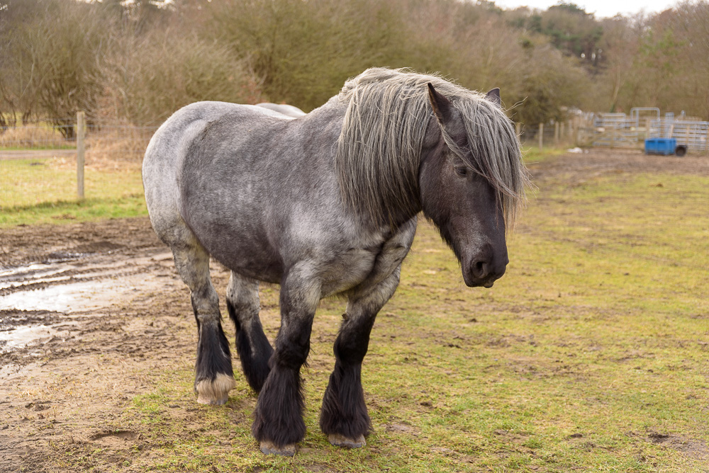 paard in duin heemskerk