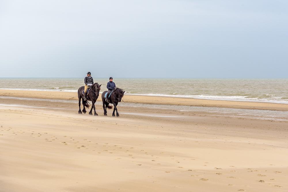 Texel's strand paardrijden