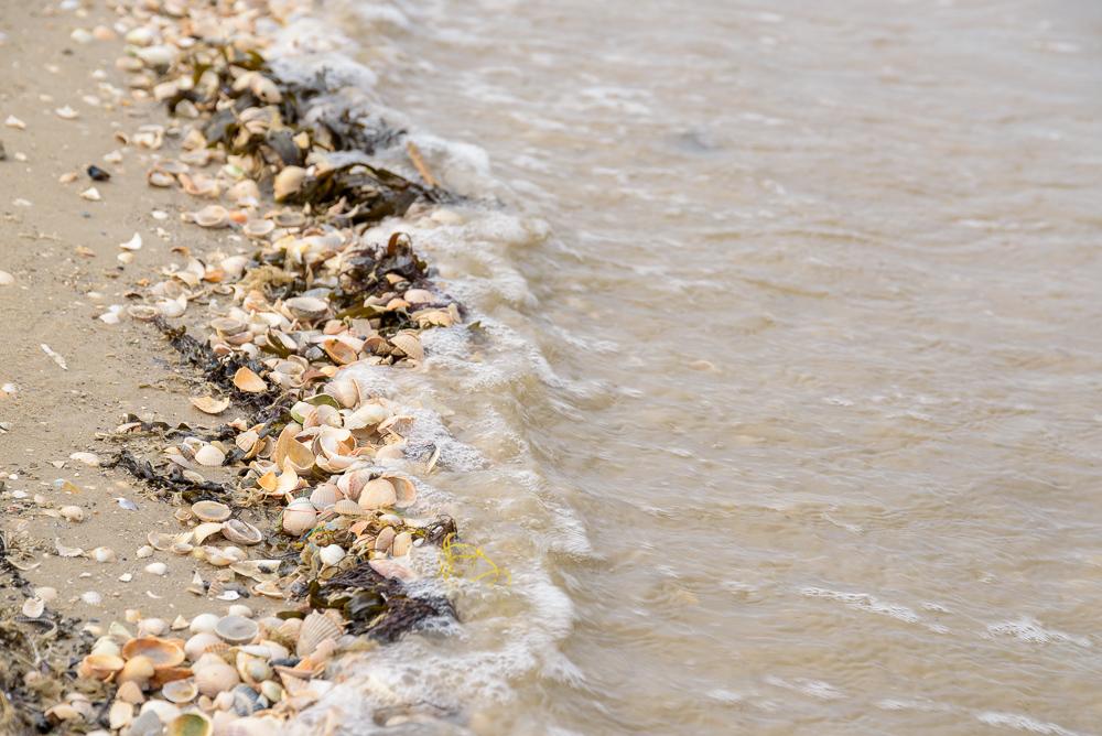 schelpen langs de waterlijn