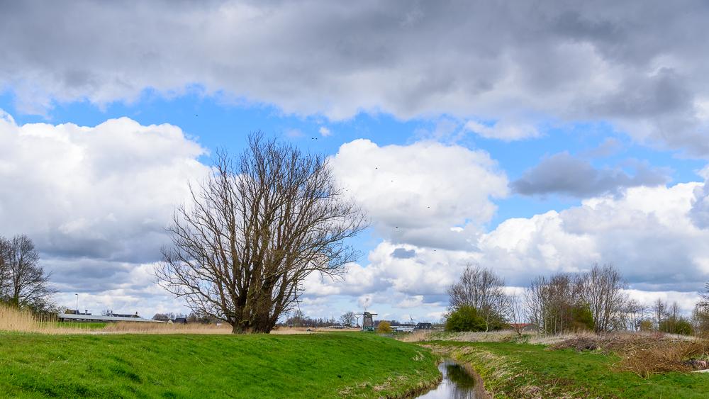 boom en wolken