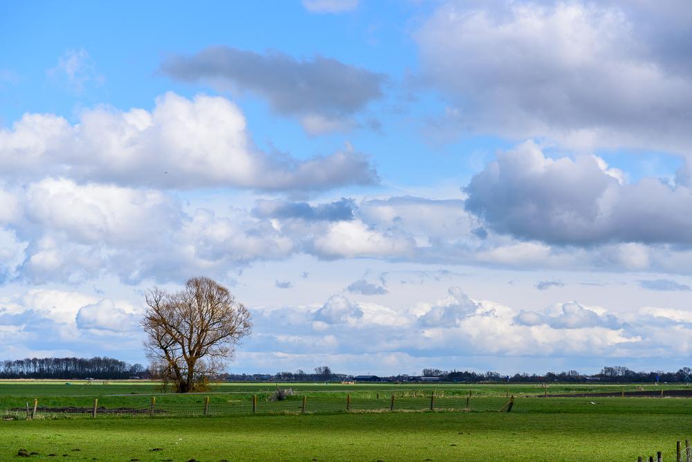 solitaire boom onder wolkenlucht