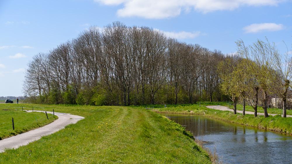 bomenrij langs de N194- Braken