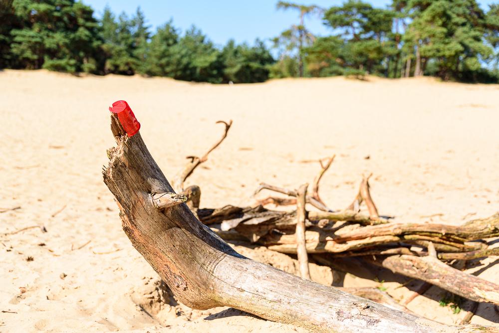 Been op het Wekeromse zand
